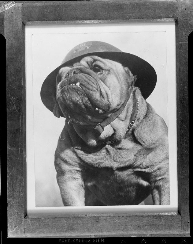 Bulldog With Hat - Leslie Jones