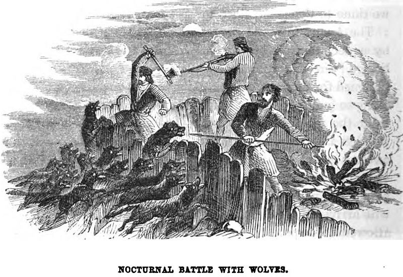 Nocturnal Battle with Wolves