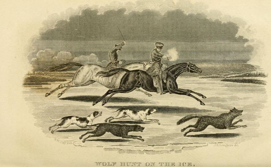 Wolf Hunt on the Ice
