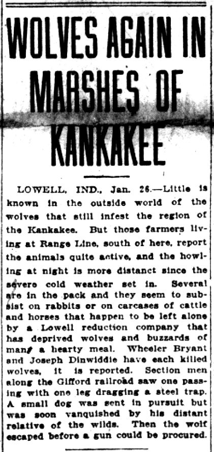 Wolves -- Lake County Times, January 26, 1918